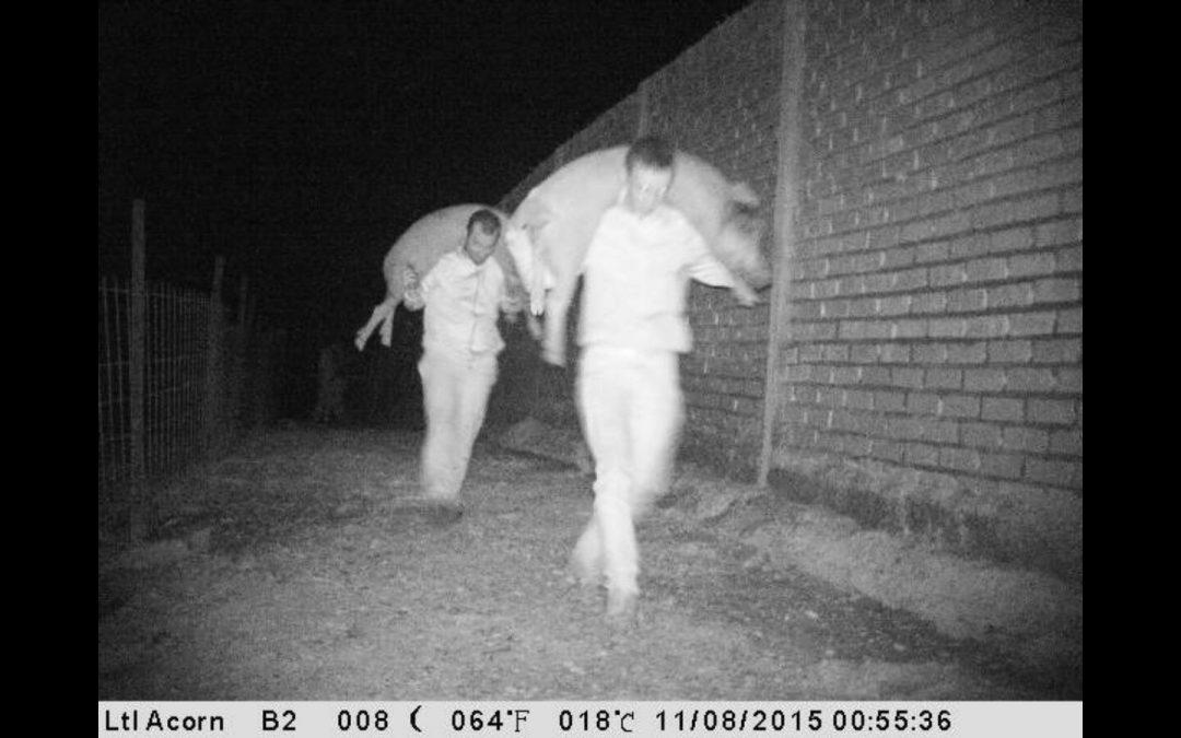 Cámaras de aguardo cazan a furtivos en fincas de caza.